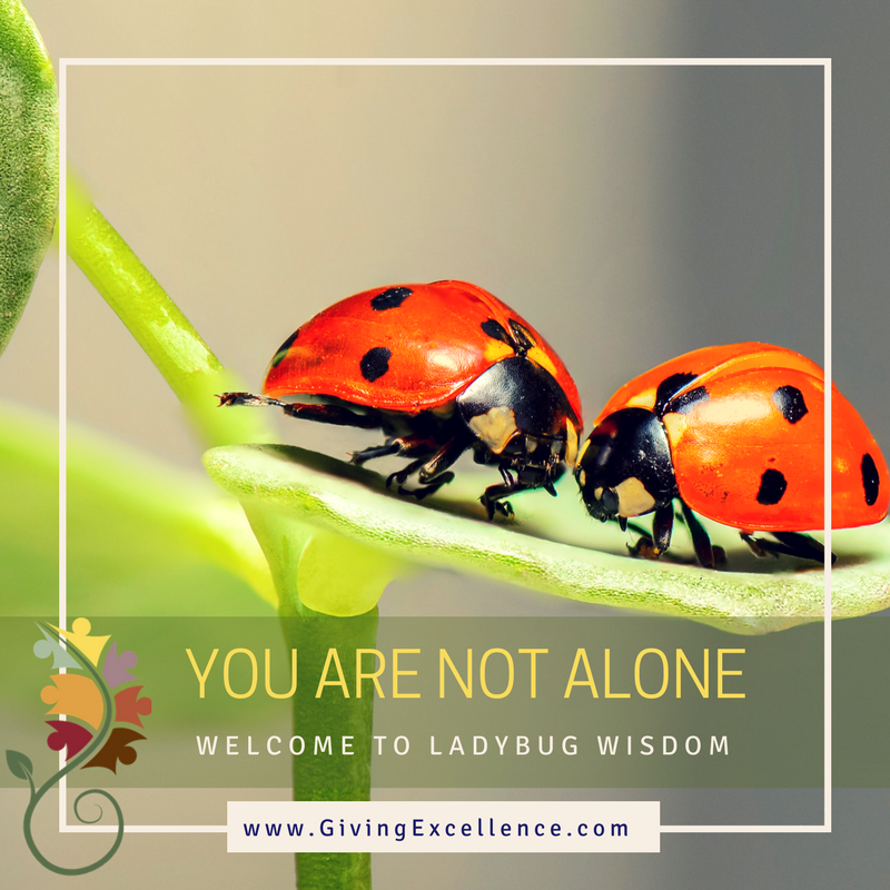 Ladybug Wisdom: You are not alone