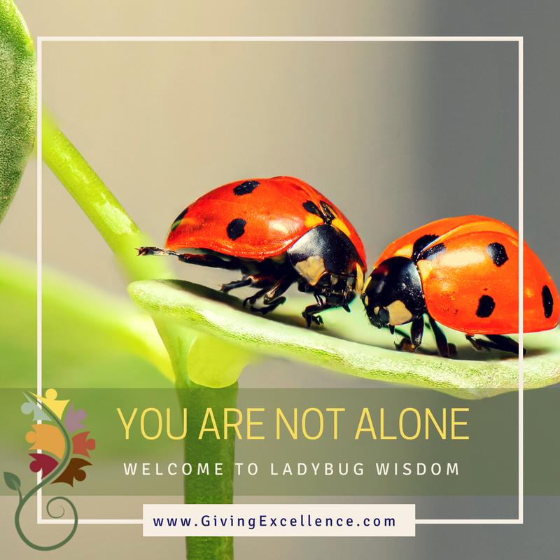 Ladybug Wisdom: You are not alone
