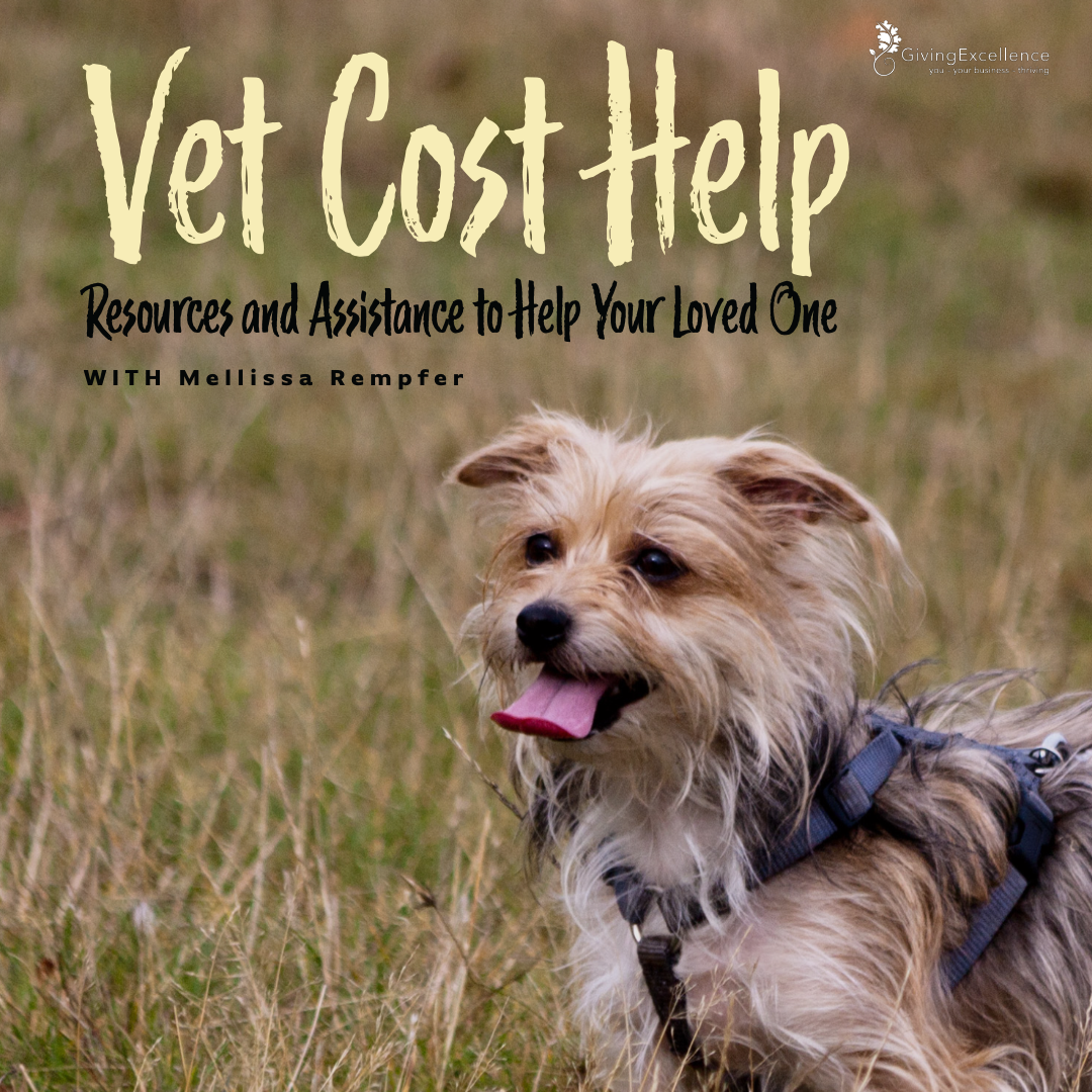 Vet Cost Help: Resources and Assistance to Help Your Loved One